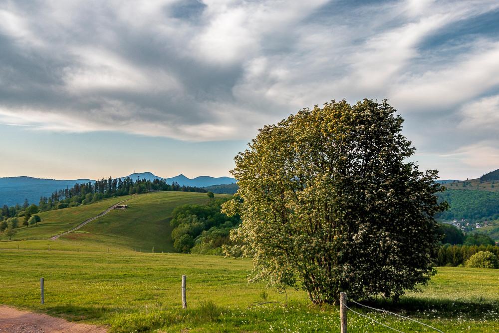 pâturage, prairie et verdure en montagne et ciel nuageux