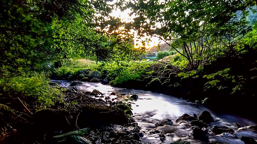 petit lit de rivière qui passe dans un sous-bois