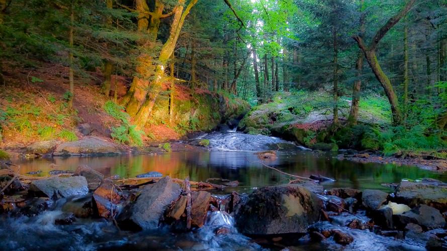 bassin d'une cascade et ses rochers au milieu des bois