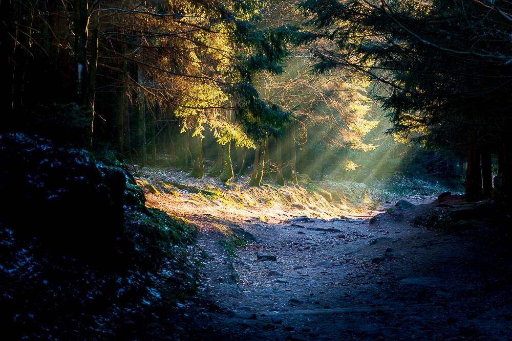 rayons de soleil à travers un chemin de forêt