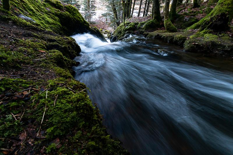 torrent d'eau rapide en forêt
