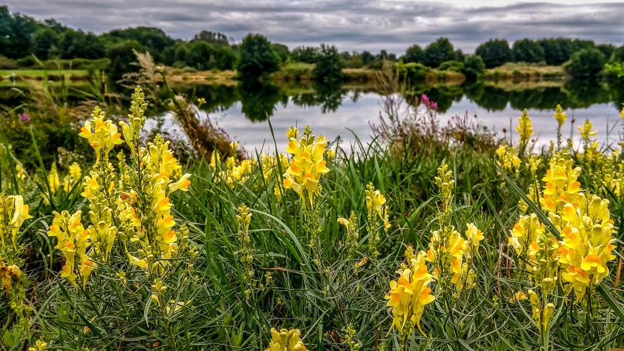 fleurs sauvages et verdure devant un étang
