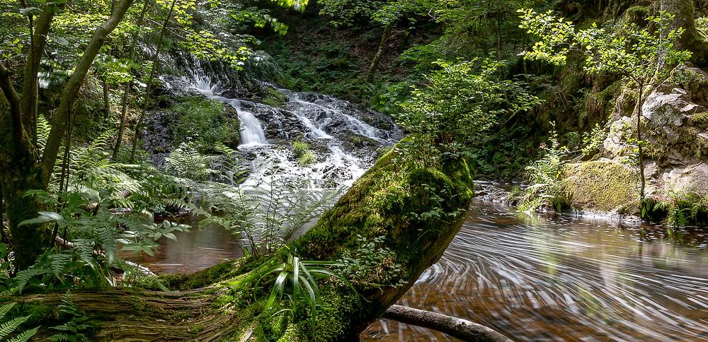 Une cascade au milieu de la forêt en été