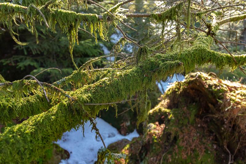 mousses sur des branches en forêt