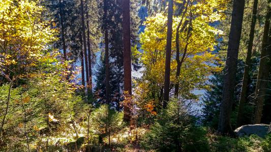 le lac vu depuis la forêt aux couleurs d'automne