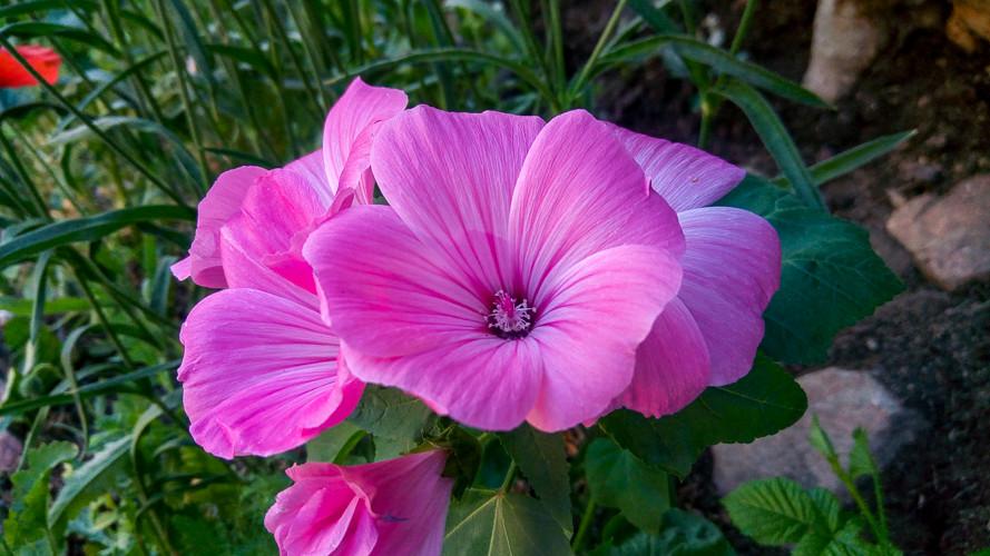 jolie fleurs du jardin au printemps