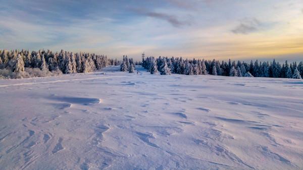 prairie enneigée et forêt sous un ciel voilé