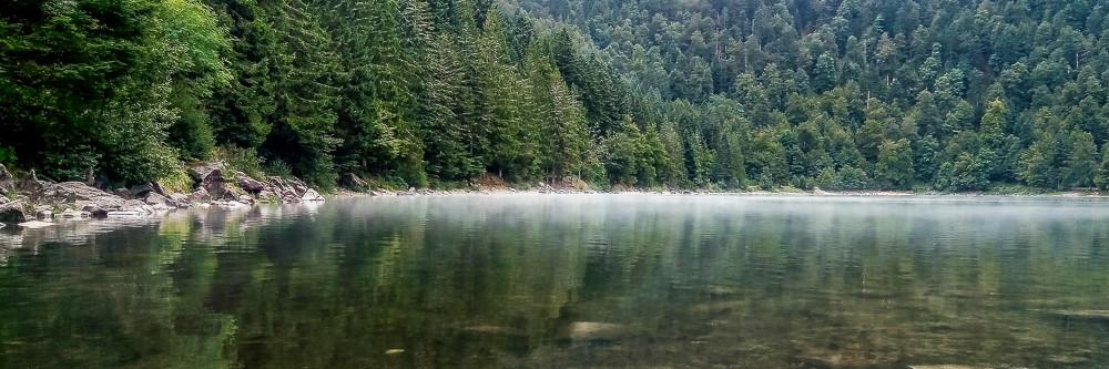 panorama de la brume sur un lac entouré de sapins