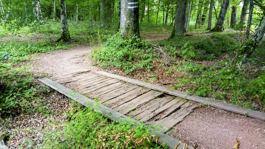 ponton et lit de source asséché au milieu de la forêt