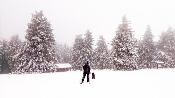randonneur et son chien avancent dans la neige vers une sapinière