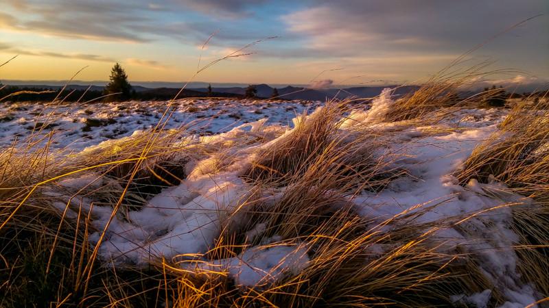 herbes enneigées d'une prairie au couché du soleil