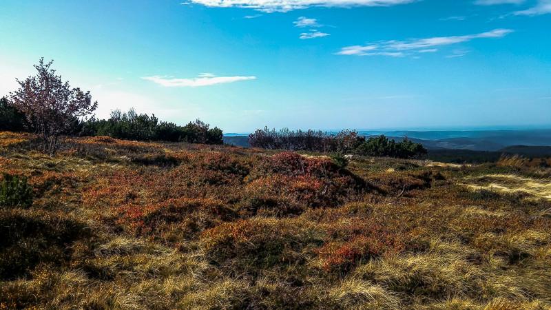 tourbières buissons colorés et herbes hautes sous un ciel bleu
