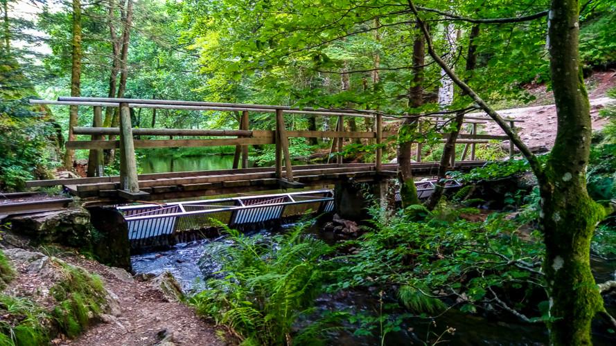 un pont par dessus une rivière entouré de forêt