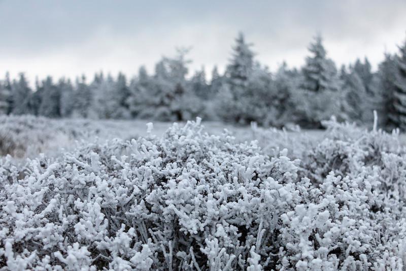 arbustes gelés dans une prairie