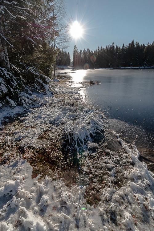 tourbières glaçées en bord de lac