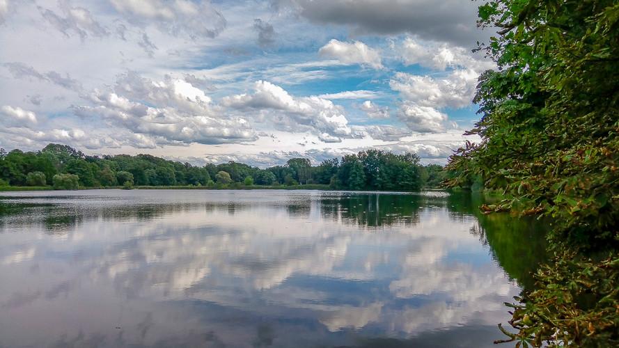 végétation et reflexion du plan d'eau et forêt