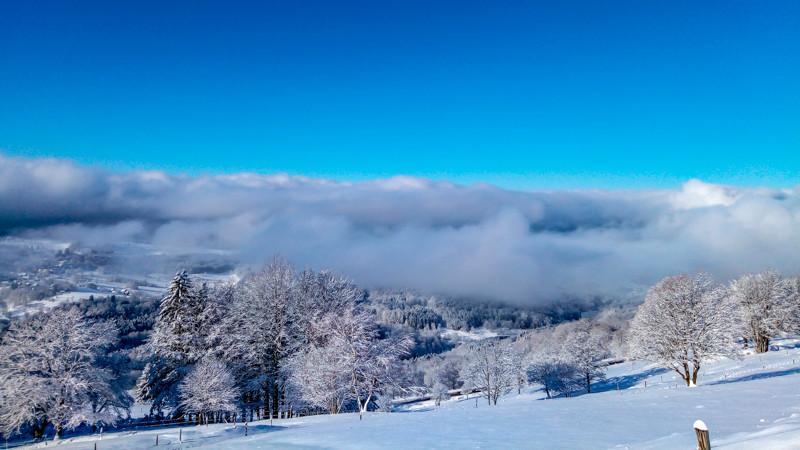 paysage d'arbres et de nuages en hiver