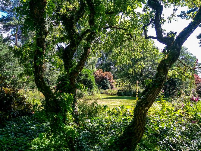 jardin paysagé de verdure arbres et buissons