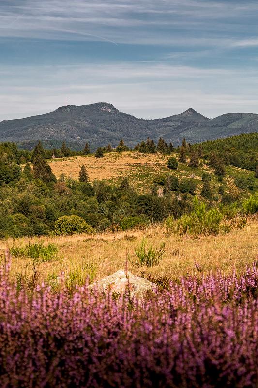 tourbes, paturages et montagnes colorées en été