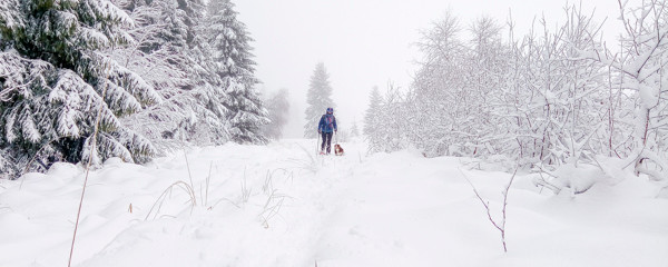 un randonneur et son chien dans un paysage hivernal brumeux