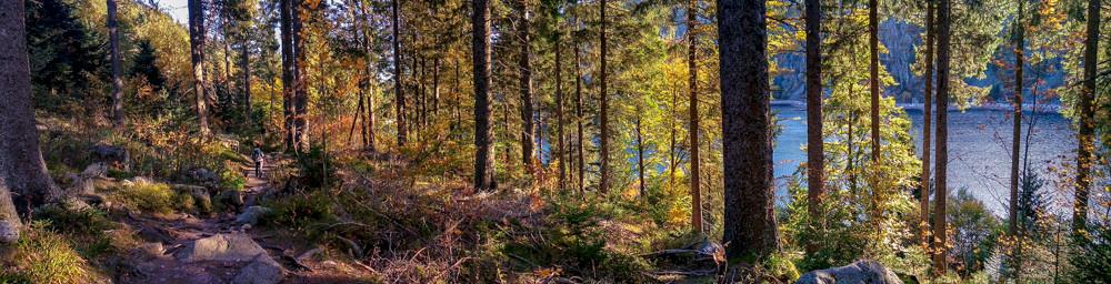 chemin forestier au bord du lac sous les couleurs d'automne