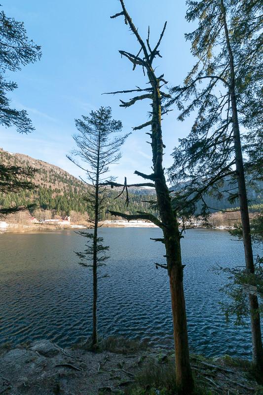 arbre mort en bord de lac