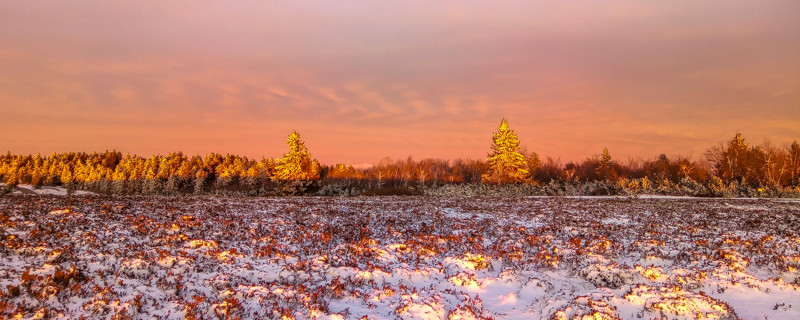 pré partiellement enneigé et forêt sous un ciel rougoyant