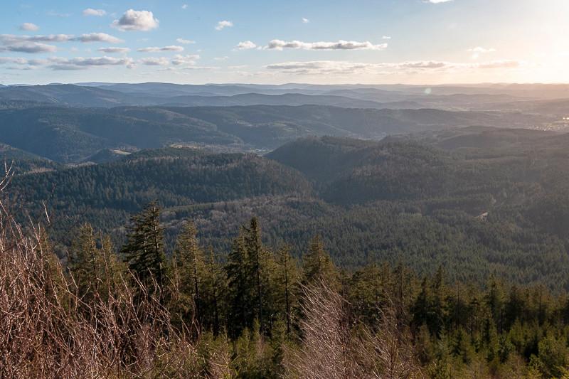 Paysage de forêts et colines