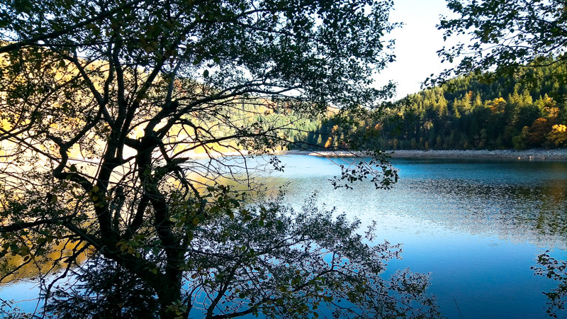 ombre chinoise d'un arbre devant le lac Blanc