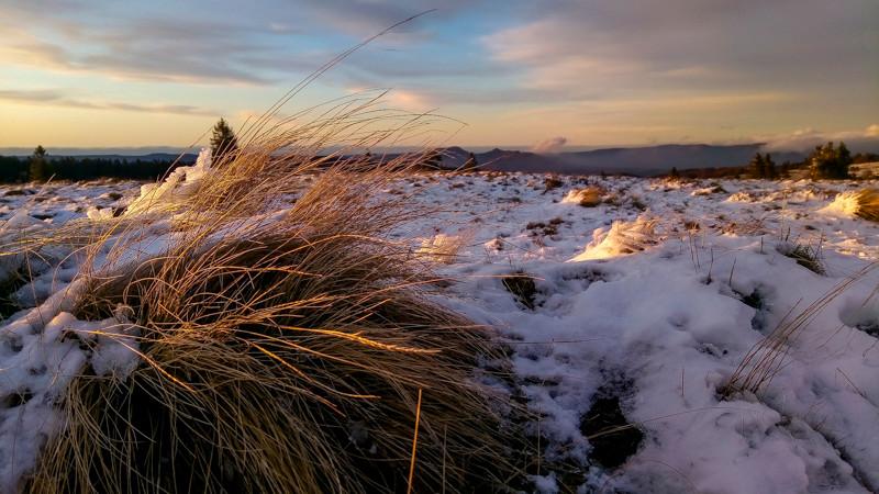 tourbe d'herbe partiellement sous la neige dans un pré sous ciel voilé