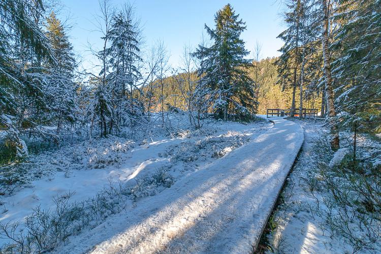 pontons en bois sous la neige en forêt