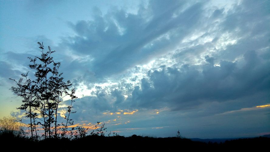 arbuste et prairie en ombres chinoises sous ciel nuageux et coloré