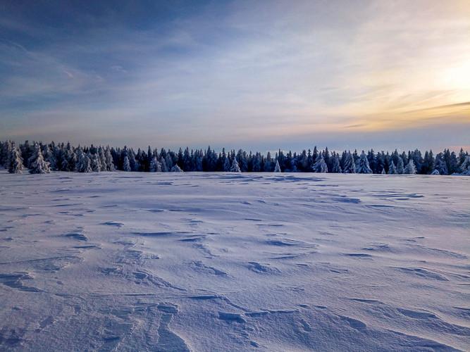 prairie enneigée et forêt en arrière plan sous un ciel voilé