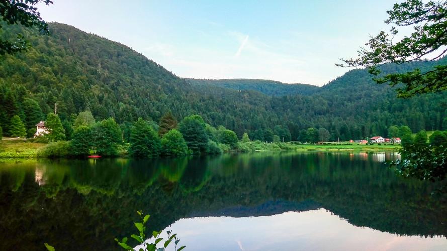 verdure et forêt autour du lac