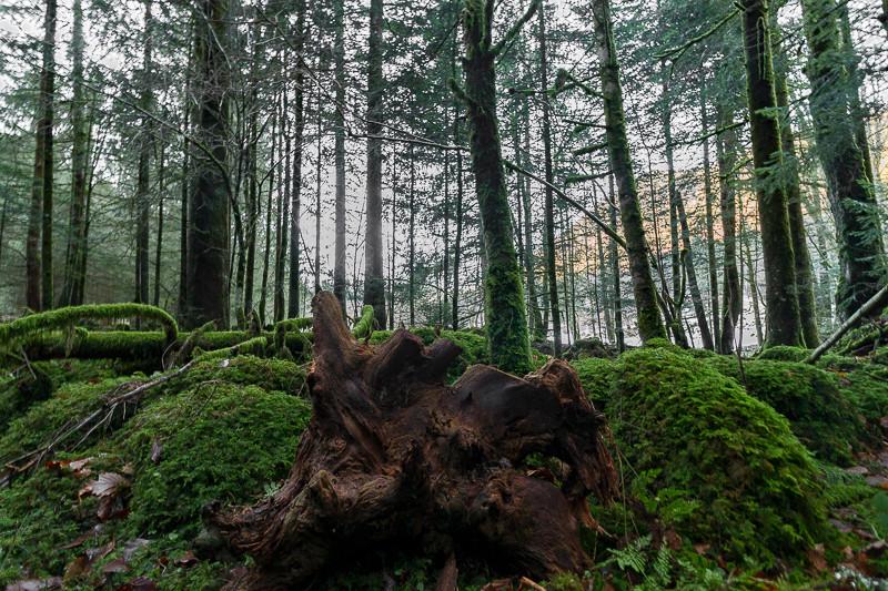 une forêt pleine de mousses