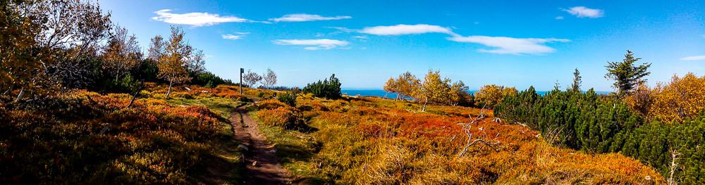 panorama du plateau composé d'herbes hautes et d'arbustes couleurs d'automne