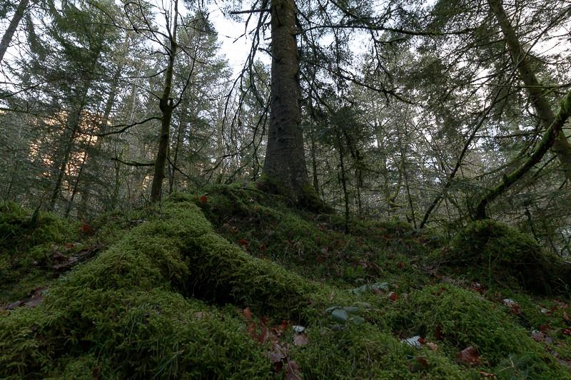 tapis de mousses sur les racines