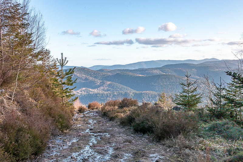 Chemin et paysage semi-montagneux de forêts