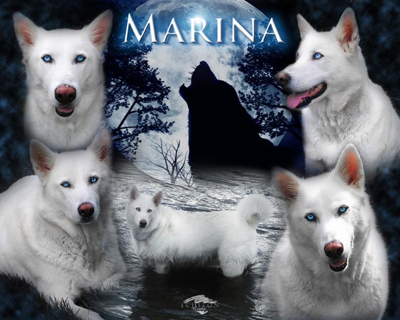 Marina pet memorial