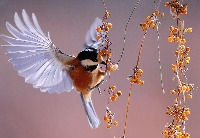 bird-1045954_1920_edited.jpg