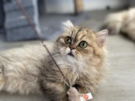 Kitten Caboodle!