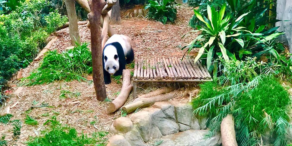Singapore Zoo Virtual Extravaganza!