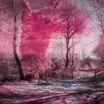 Infrared Venus