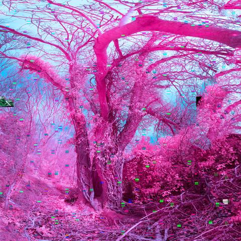 Friston Forest Glitch