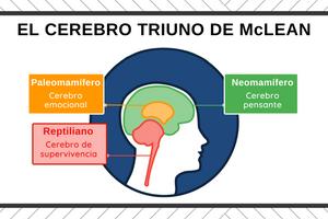 El cerebro triuno de Paul McLean