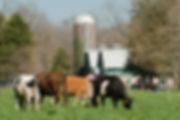 Cherry Grove Farm -8839-L.jpg