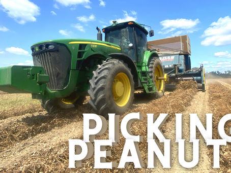 Why I Love Peanut Harvest