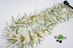 White Lace Euphorbia