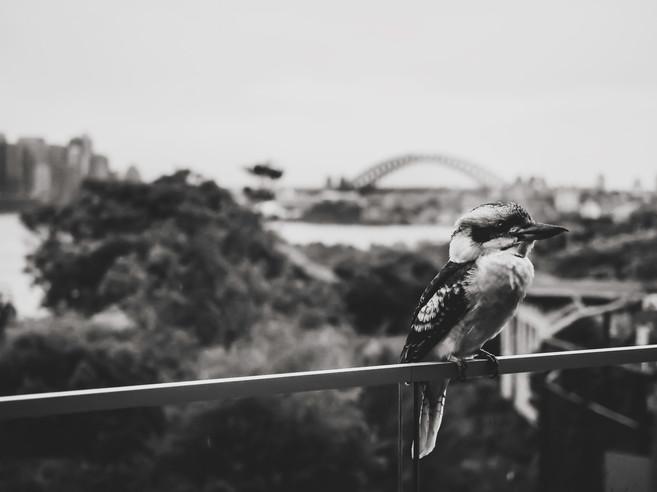 Sydney15.jpg