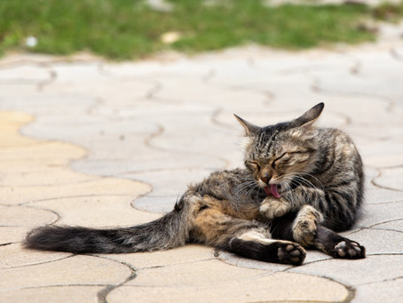 4 REASONS TO GROOM YOUR PETS REGULARLY